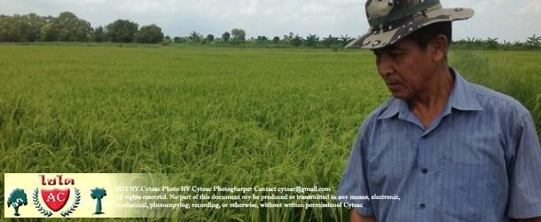 คุณสมพงษ์ ชิตณรงค์ เกษตรกรจากปราจีนบุรี
