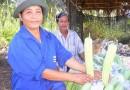 (Thai) การปลูกผักสวนครัว