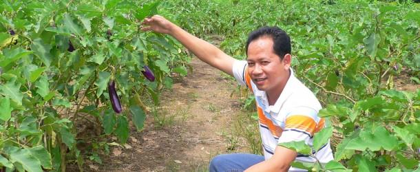 (Thai) การปลูกมะเขือยาว !–:–>