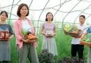 เมื่อหนุ่มสาวจีนนับล้าน กลับบ้านทำเกษตร